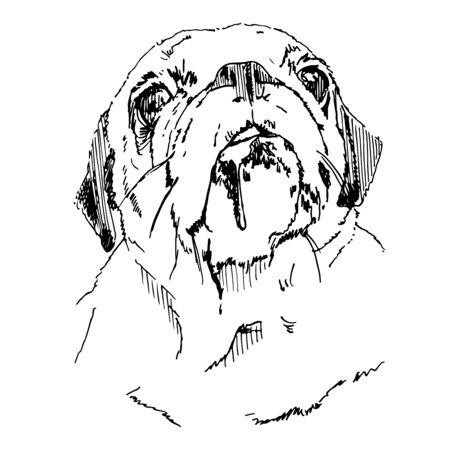 Pug Head Vector Hand Drawn Sketch Zdjęcie Seryjne