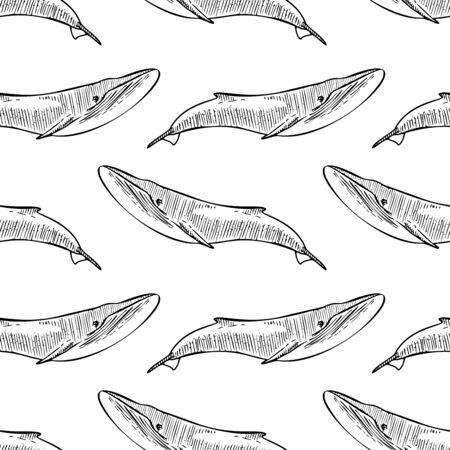 Whale Sketch Vector Illustration Seamless Pattern Zdjęcie Seryjne