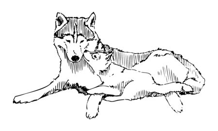 Wolf With Cub Vector Sketch Card Illustration Ilustracja