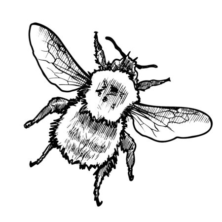 VectorHand Drawn Ink Bumblebee Sketch Illustration  イラスト・ベクター素材