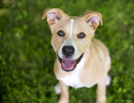 A smiling mixed breed puppy in the grass