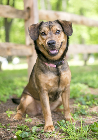 Portrait of a brown mixed breed dog outdoors Imagens - 94153628