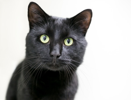 A black domestic shorthair cat with green eyes