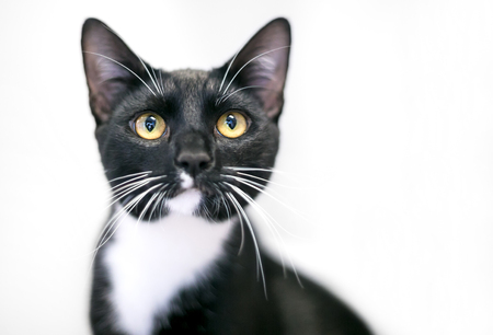 A black and white Tuxedo cat with bright yellow eyes