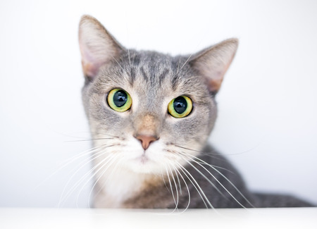 A wide-eyed domestic shorthair cat with large dilated pupils