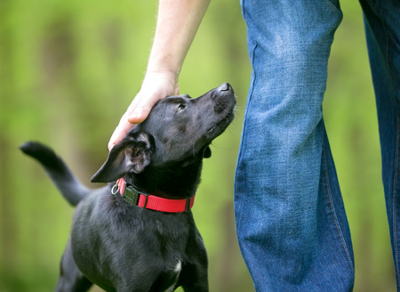 A person petting a small black Terrier mixed breed dog outdoors