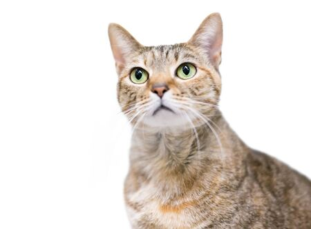 A domestic shorthair cat with patched tabby markings and green eyes