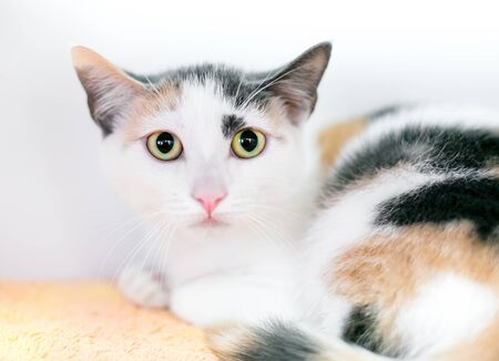 A calico shorthair kitten with dilated pupils and a timid expression