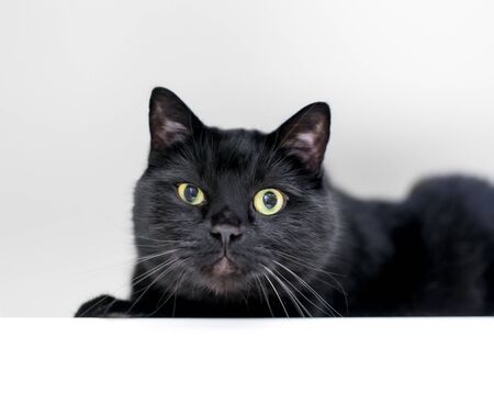 A black shorthair cat squinting one eye and looking at the camera with a grumpy expression