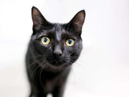A wide eyed black shorthair cat looking at the camera