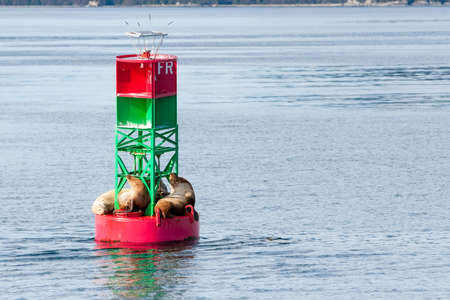 A group of Steller sea lions (Eumetopias jubatus) resting on a navigation buoy off the coast of Alaska Stock fotó
