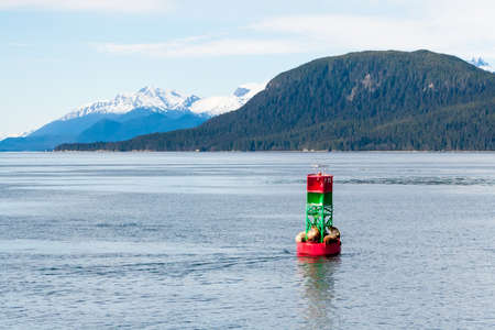 A group of Steller sea lions (Eumetopias jubatus) resting on a navigation buoy off the coast of Alaska, with snow-capped mountains in the background Stock fotó