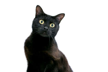 A wide eyed black shorthair cat with dilated pupils and a surprised expression