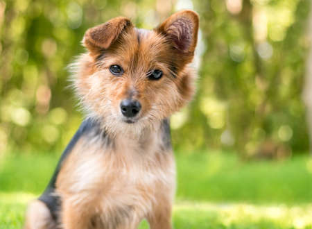 A cute scruffy mixed breed dog with one straight ear and one folded ear, looking at the camera with a head tilt
