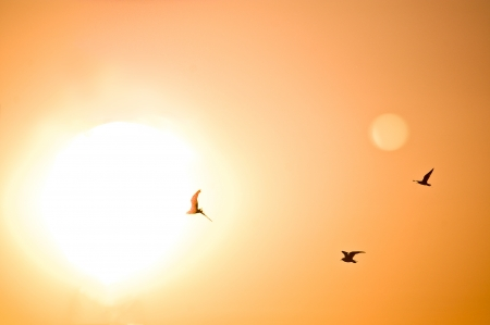 Silhouette of three birds flying into the sun in an orange sky Stock Photo