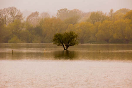 Water bound tree in flooded field