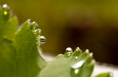 Raindrops on the edge of a leaf