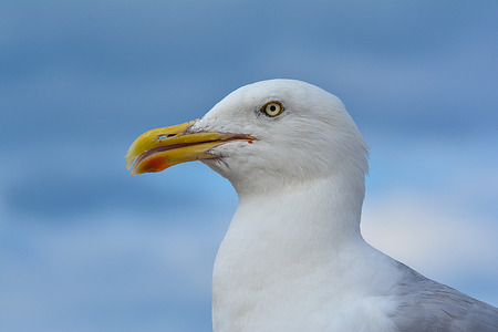 Seagull Stock Photo