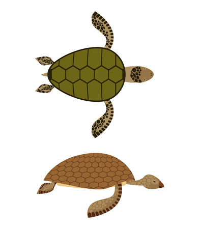 reptiles: set Water turtle. Side view and top view. Deep-sea animals. Marine reptiles with shells. Vector illustration