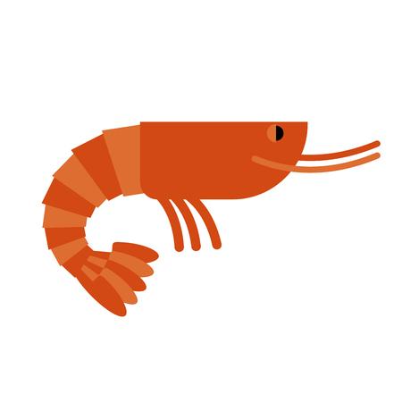 Shrimp. Marine cancroid. Boiled shrimp delicacy. Cooked Orange shrimp on white background.