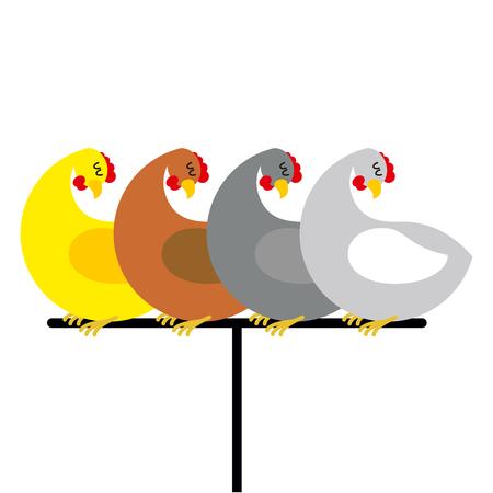 perch: Chicken sitting on perch. Birds at farm are sitting on Bird perch