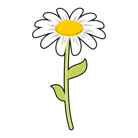 chamomilla: Chamomile field flower. White petals and green stem. Cute flower Daisy on white background Illustration