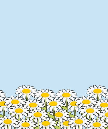 field flowers: Chamomile landscape. Flowers and blue sky. White beautiful wild flowers. Flower meadow.