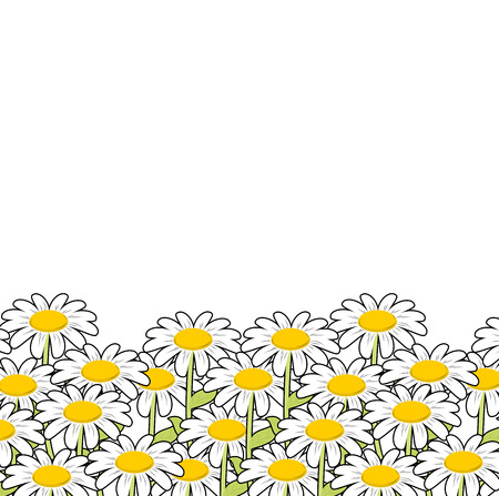 Chamomile. White flowers summer meadow. Beautiful wild flowers. Summer landscape and flowers. Illustration