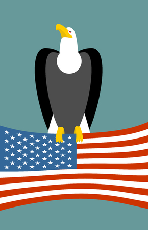 a large bird of prey: Bald eagle and American flag. USA national symbol of bird. Large birds of prey and flag state