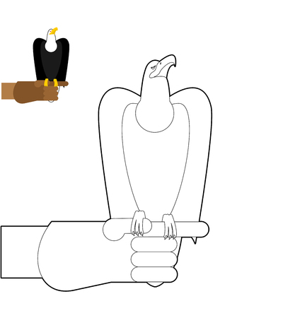 predator: Falconry coloring book. Bird predator sitting on hand in  linear style. Bald Eagle bird hunting