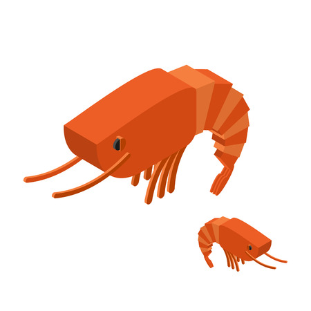 crustacean: Shrimp Isometric on white background. Marine arthropod animal. Oceanic plankton. Underwater crustacean