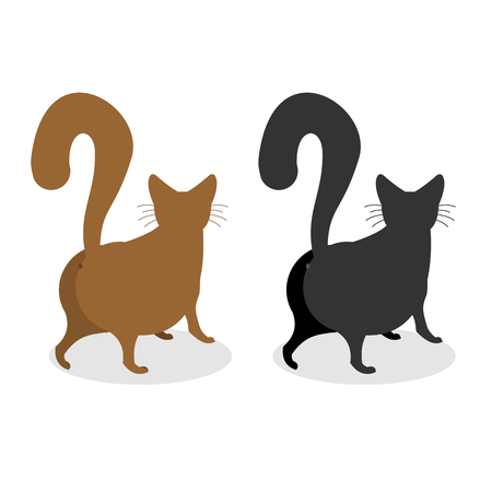 bushy: Cat Back. Pet escapes. Funny animal with bushy tail