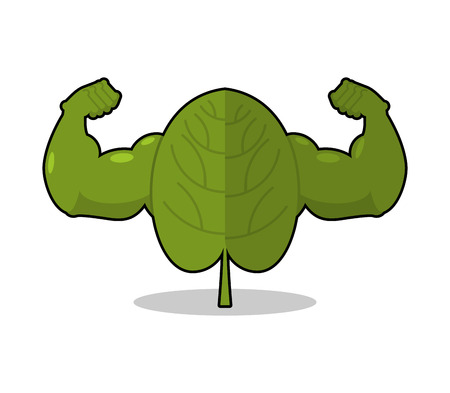 Spinach strong. Useful Herbs with big muscles. Green leaves lettuce powerful arms. Sports, dietetic food. Strong organic vegetable grass