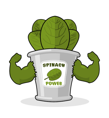 Spinach strong and powerful. Muscular arms of tin spinach. Healthy greens. Athletic Green sheets. Sports plant Illustration