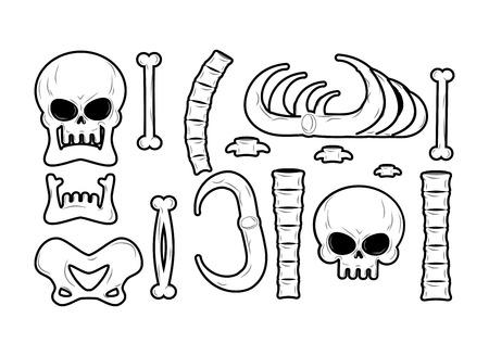 tibia: Bones set. Anatomy icons. Skull and spine. Jaw and pelvis. Ribs and tibia. Skeleton bone