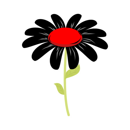 Black flower isolated. floret of sorrow and grief on white background
