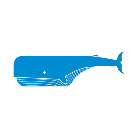 baleen whale: Whale isolated. Large sea mammal on white background