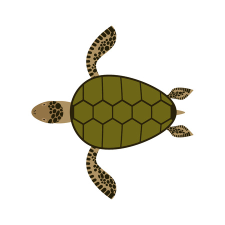 sea water: Sea turtle isolated. Water reptile on white background