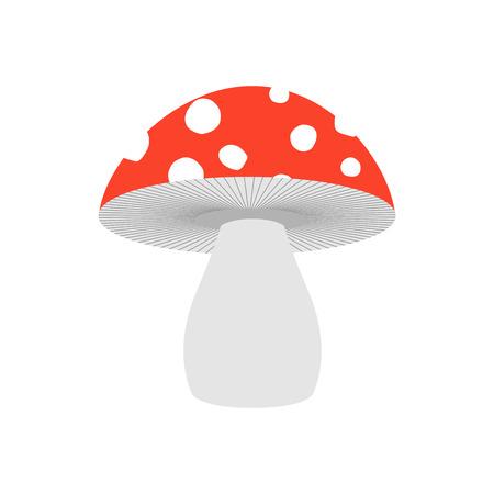 Amanita isolated. Poisonous Mushroom on white background. Illustration