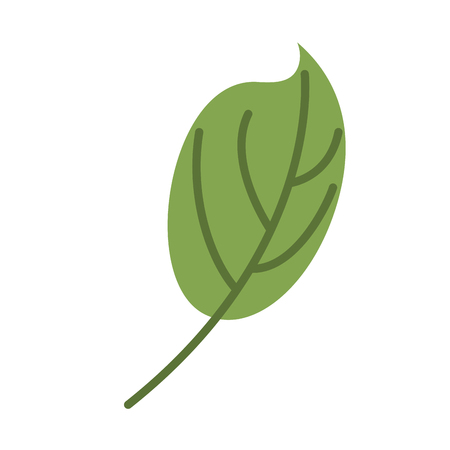 Green leaf isolated. Leaves on white background Illustration