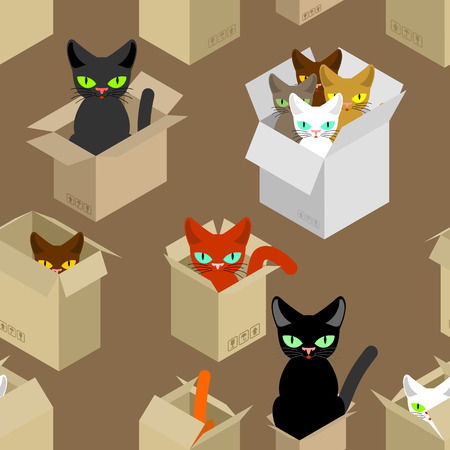 gray cat: Cat in box pattern. Pet in cardboard box background. vector texture