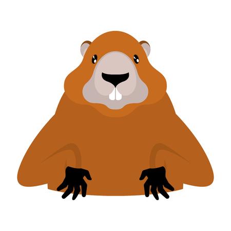 Groundhog Marmot portrait illustration. Illustration