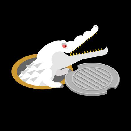 Albino alligator in manhole
