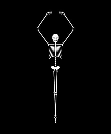 Skeleton ballerina isolated. Skull and bones ballet. Halloween Vector illustration. Archivio Fotografico - 107486017