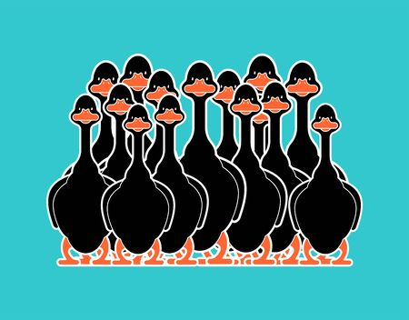 Black goose flock isolated cartoon. domestic waterfowl family. vector illustration