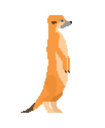 Meerkat pixel art. Small mongoose 8 bit. vector illustration