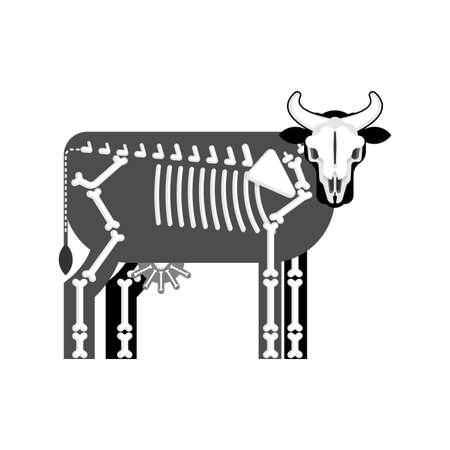 Cow skeleton isolated. Farm animal bones. Bull anatomy. vector illustration