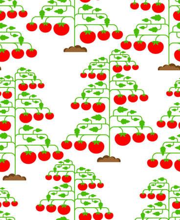 Tomato bush pattern seamless. Tomatos background. vector texture Vektoros illusztráció