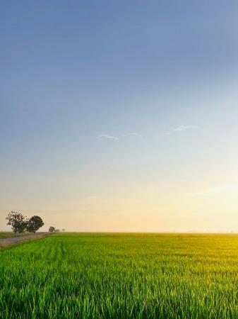 日の出水田