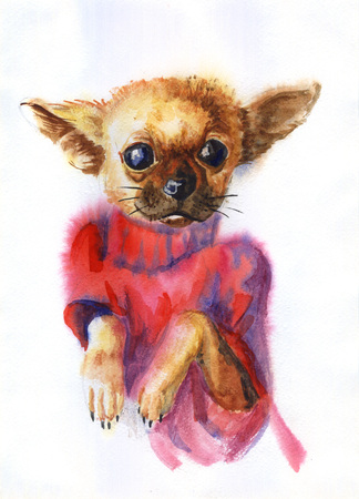 Watercolor painting of the fashion dog breed Chihuahua in a pink sweater Stock Photo